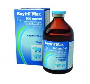Baytril Max 100mg/ml Injection for cattle & pigs 100ml, POM-V