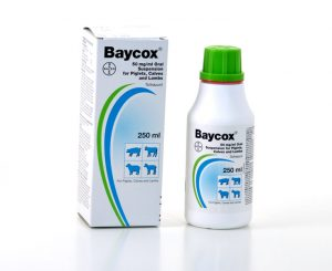 Baycox 50mg/ml Oral suspension for piglets Calves & Lambs 250ml, POM-V