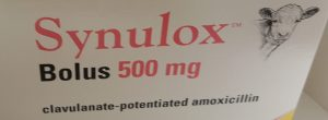 Synulox Bolus 500mg 20 pack, POM-V