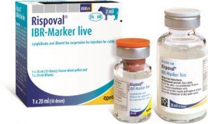 Rispoval IBR Marker LIVE 50 dose with applicators, POM-V