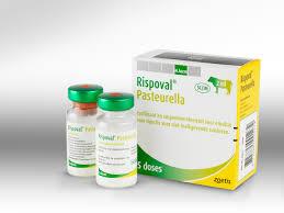 Rispoval Pasteurella 5d, POM-V