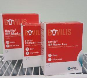 Bovilis IBR live